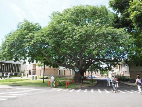 ハワイ大学のキャンパス(写真:家入龍太。以下同じ)