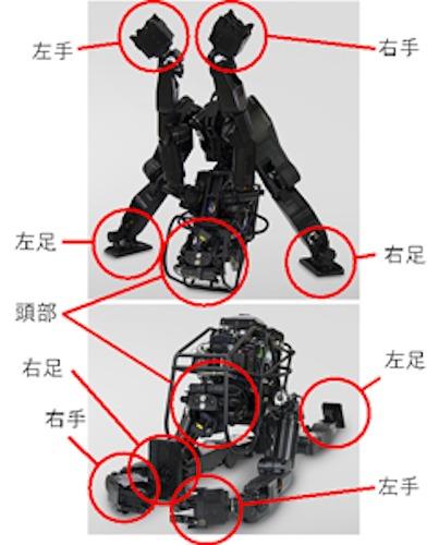 前屈(上)や前後開脚(下)の姿勢は人間を超えている