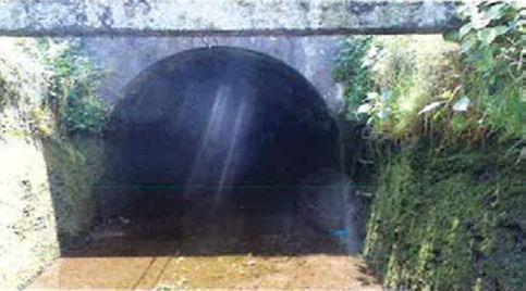 表面に藻類が繁殖する導水路トンネルの例