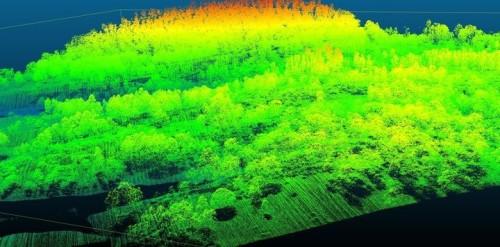 森林を上空から計測した点群データの例