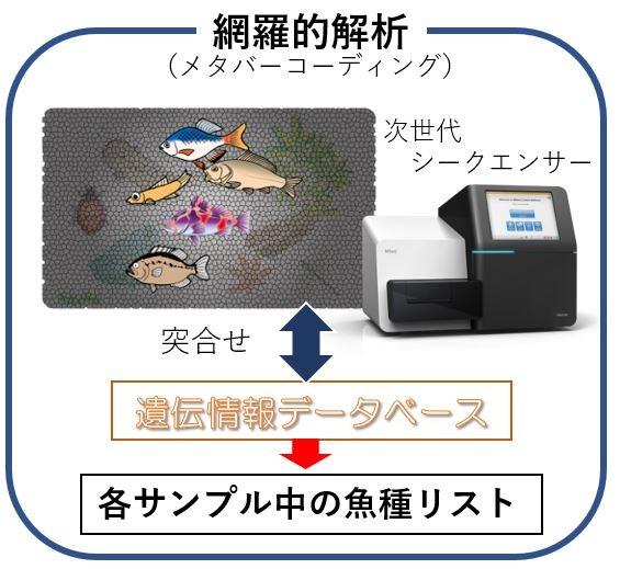 河川水に含まれるDNAからすんでいる魚種を特定するシステム