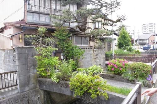 私有橋の両側を花壇にした住宅。奥の松の木は屋根から突き出している